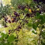 sonbahar bereketi (10)