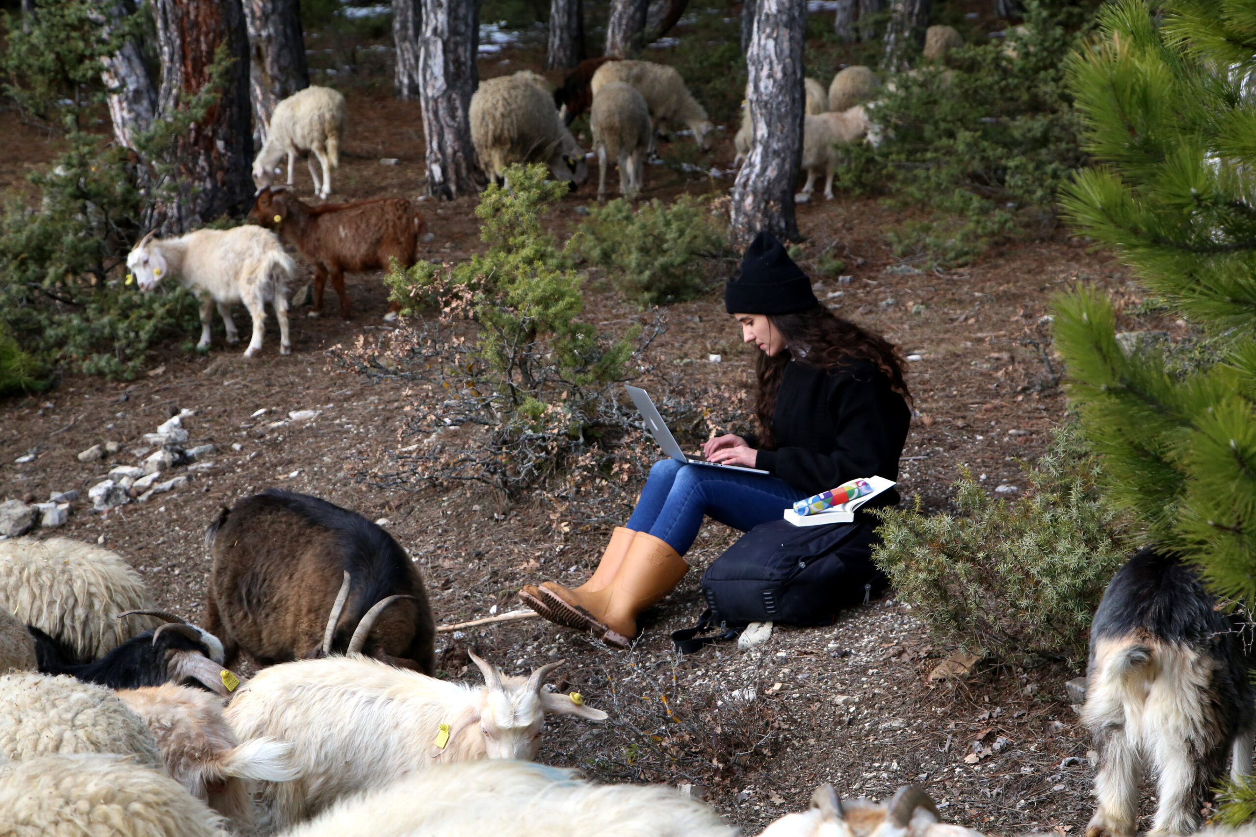 Koyun güderken  tezini yazıyor